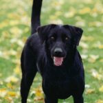 Glucosamine For Dogs